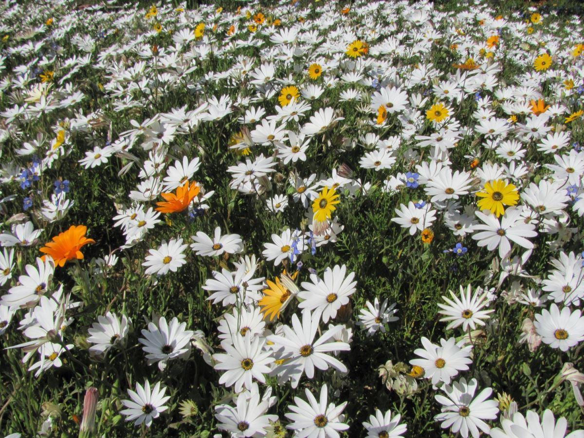 flowers-white